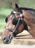 caballoanteojeras1