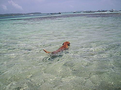 El perro que creía que no sabía nadar